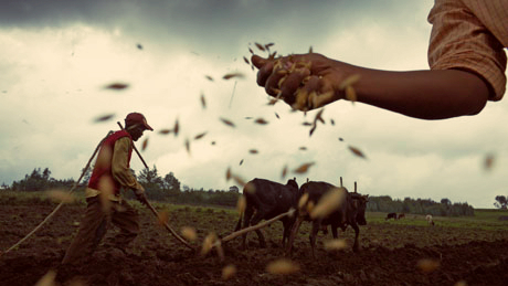 MDG--Seed--Plowing-a-fiel-009